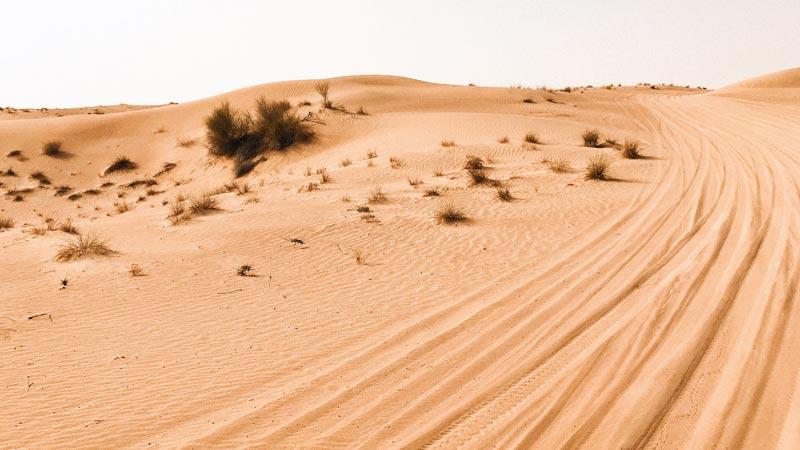 sand tire tracks