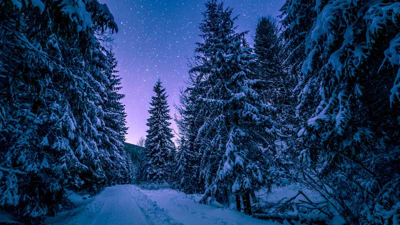 trees in the winter night